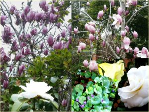 pictures of Spring flowers